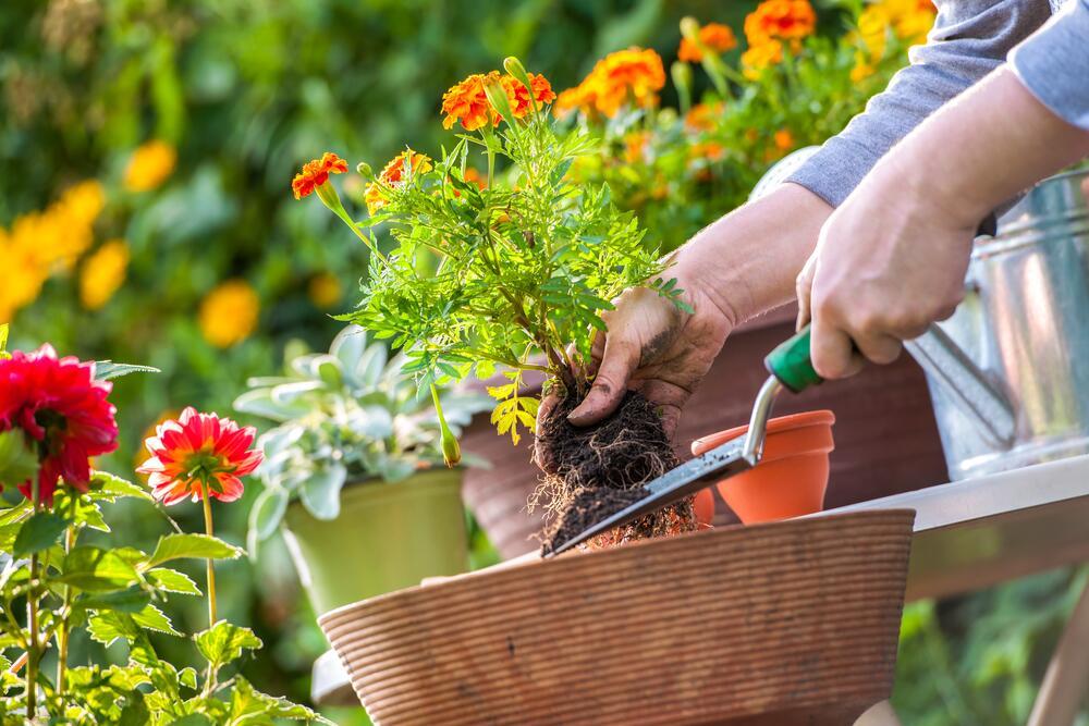 Календарь садовода Кубани 2021 лунный, посевной и посадочный, таблица сада, Краснодарского края