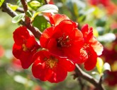 Поступление луковичных, саженцев плодовых, роз, пионов и клематисов в упаковке!