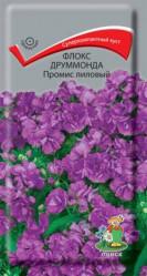 Флокс друммонда Промис Лиловый однол. 10шт. (Поиск)