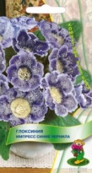 Глоксиния Импресс Синие чернила 5шт. (комн.раст.)  (Поиск)