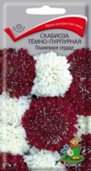 Скабиоза темно-пурпурная Пламянное сердце однол. 10шт. (Поиск)