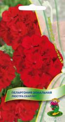 Пеларгония зональная Люстра Скарлет 5шт. (комн.раст.)  (Поиск)