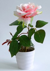 Роза в кашпо 1 цветок кремовая (PFH13053-11 BB613) 16-0068