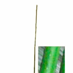 Поддержки для комнатных растений, палки, опоры - Палка LIST'OK д/растений пластм. 270см  LCSP-20-270