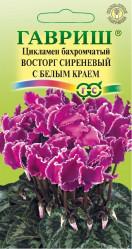 Комнатные цветы - Цикламен махровый Восторг сиреневый с белым краем 3шт. Элитная клумба Н15 (Гавриш)