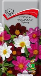 Георгина низкорослая Хоровод однол. 0,2гр. (Поиск)