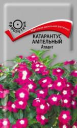 Катарантус ампельный Атлант 10шт  (Поиск)