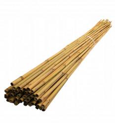Бамбук поддержка 300см. 22/24мм