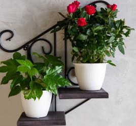 Кованая Подставка настенная с деревом Лестница на 2 цветка 13-812